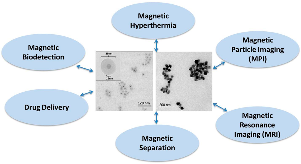 superparamagnetic nanoparticles for biomedical applications